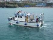 Newquay Sea Safaris