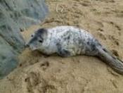 Newquay Seal