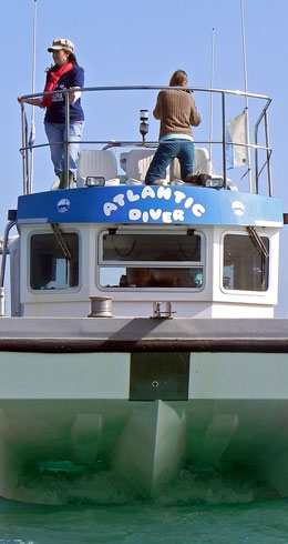 Sea safaris on the Atlantic Diver, Newquay